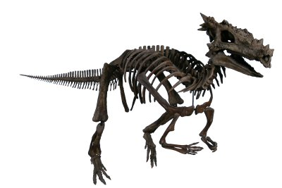dracorex